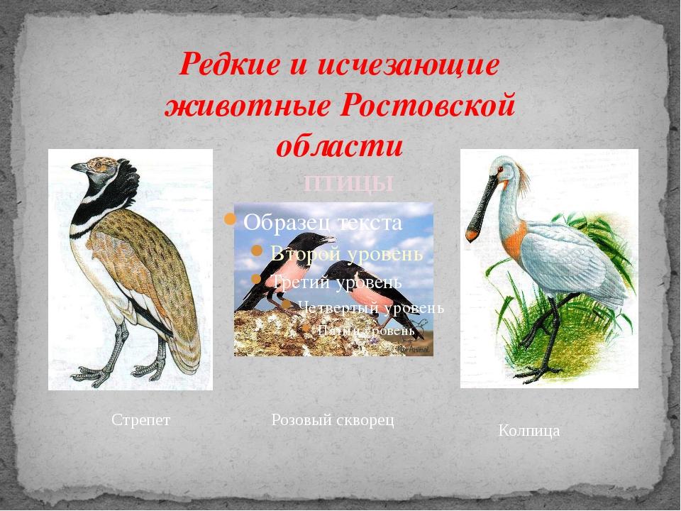 Редкие и исчезающие животные Ростовской области Стрепет Колпица ПТИЦЫ Розовый...