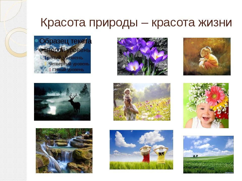 Красота природы – красота жизни