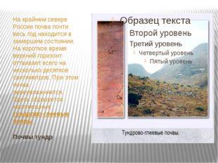 Почвы тундр На крайнем севере России почва почти весь год находится в замерше