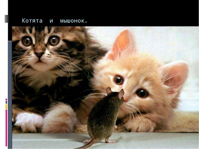 Котята и мышонок. Котята