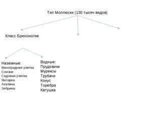 Тип Моллюски (130 тысяч видов) Класс Брюхоногие Наземные: Виноградная улитка