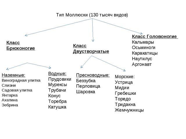 Тип Моллюски (130 тысяч видов) Класс Брюхоногие Наземные: Виноградная улитка...