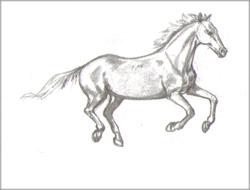 http://guazzo.ru/forblog/risovanie/karandash/risuem-loshad-2/lesson2-horse4.jpg