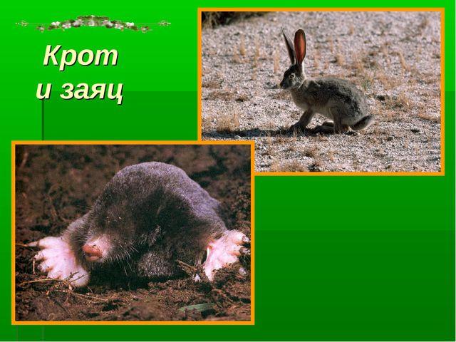 Крот и заяц