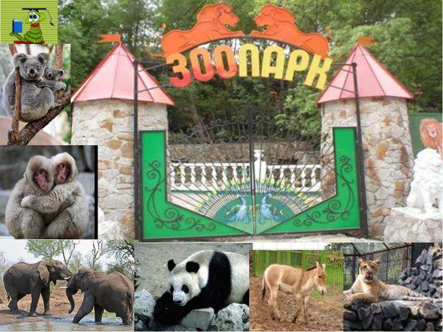 Фото зоопарка
