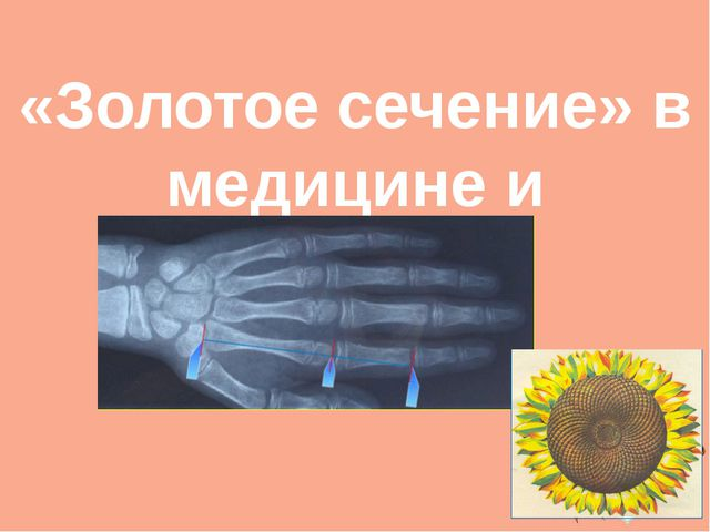 «Золотое сечение» в медицине и биологии