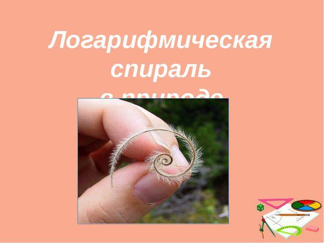 Логарифмическая спираль в природе