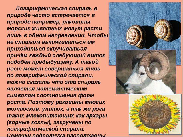 Логарифмическая спираль в природе часто встречается в природе например, рако...