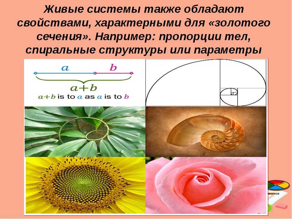 Живые системы также обладают свойствами, характерными для «золотого сечения»...