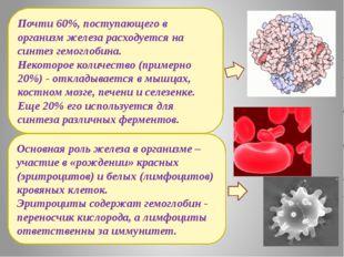 Основная роль железа в организме – участие в «рождении» красных (эритроцитов)