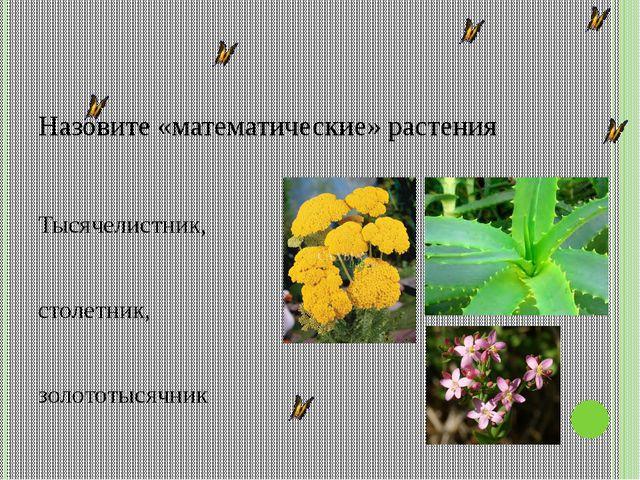 Назовите «математические» растения Тысячелистник, столетник, золототысячник