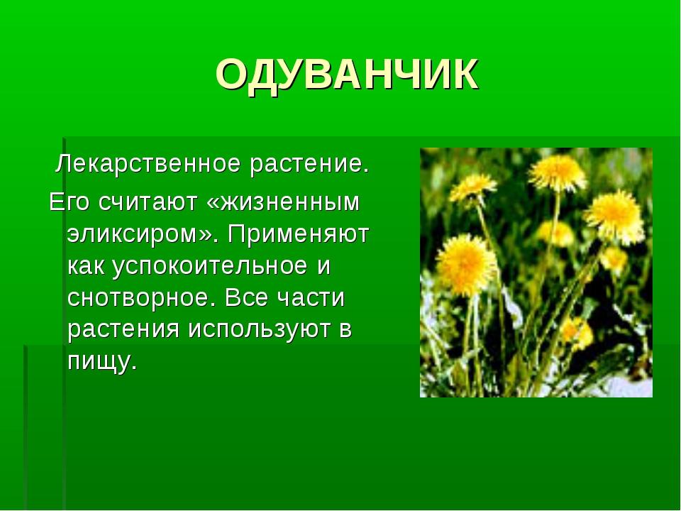 ОДУВАНЧИК Лекарственное растение. Его считают «жизненным эликсиром». Применяю...