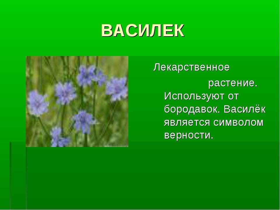 ВАСИЛЕК Лекарственное растение. Используют от бородавок. Василёк является сим...