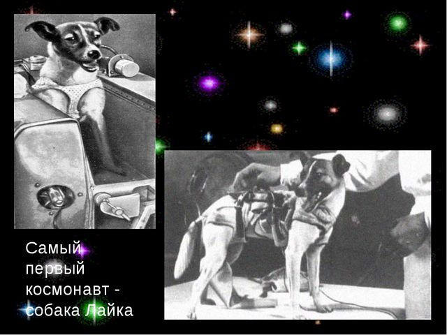 Самый первый космонавт - собака Лайка