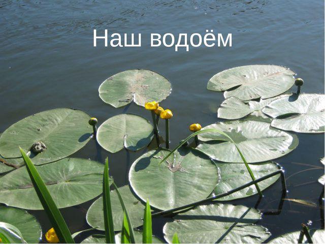 Наш водоём