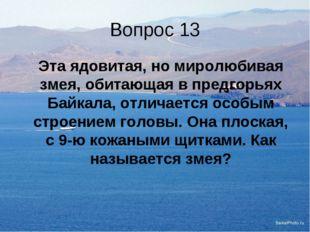 Вопрос 13 Эта ядовитая, но миролюбивая змея, обитающая в предгорьях Байкала,