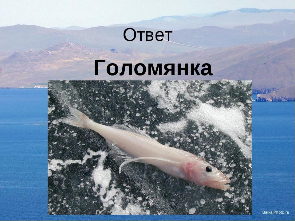 Ответ Голомянка