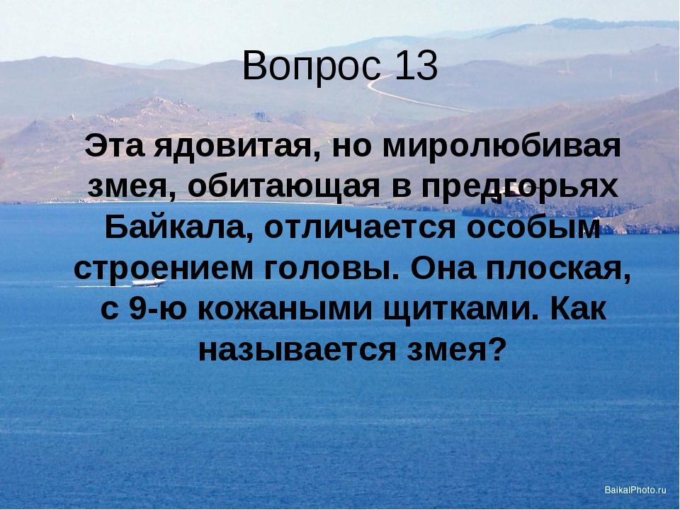 Вопрос 13 Эта ядовитая, но миролюбивая змея, обитающая в предгорьях Байкала,...