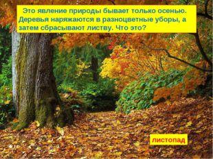 Это явление природы бывает только осенью. Деревья наряжаются в разноцветные