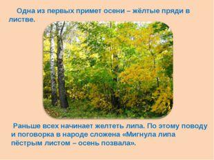 Одна из первых примет осени – жёлтые пряди в листве. Раньше всех начинает же