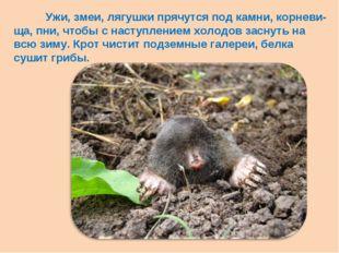 Ужи, змеи, лягушки прячутся под камни, корневи-ща, пни, чтобы с наступлением