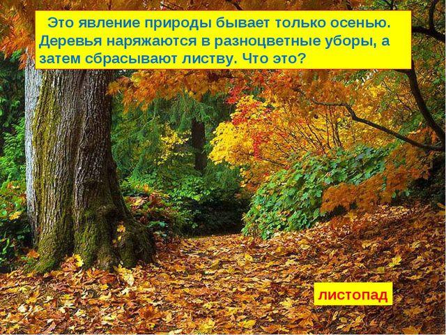Это явление природы бывает только осенью. Деревья наряжаются в разноцветные...