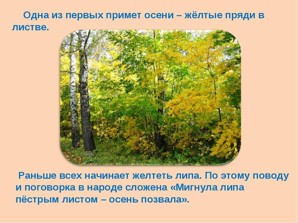 Одна из первых примет осени – жёлтые пряди в листве. Раньше всех начинает же...