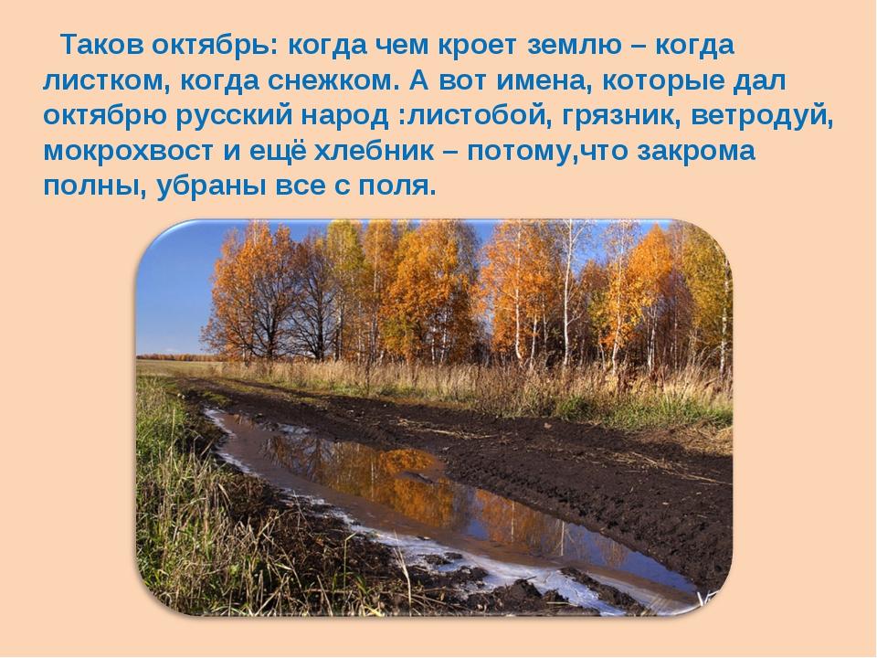 Таков октябрь: когда чем кроет землю – когда листком, когда снежком. А вот и...