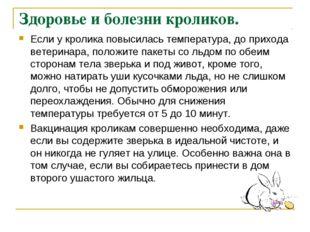 Здоровье и болезни кроликов. Если у кролика повысилась температура, до приход