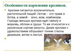 Особенности кормления кроликов. Кролики питаются исключительно растительной п