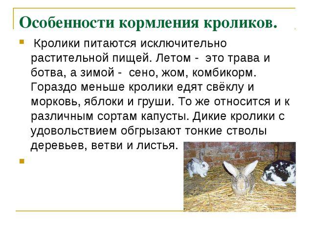Особенности кормления кроликов. Кролики питаются исключительно растительной п...