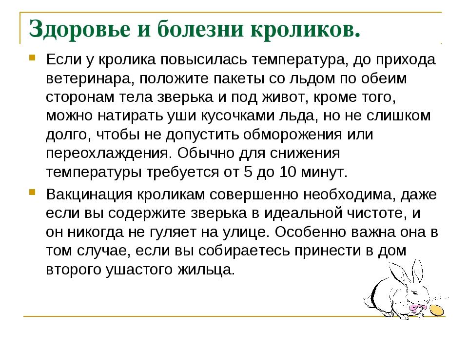 Здоровье и болезни кроликов. Если у кролика повысилась температура, до приход...