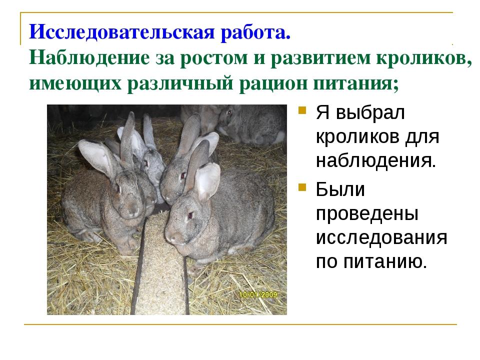 Исследовательская работа. Наблюдение за ростом и развитием кроликов, имеющих...