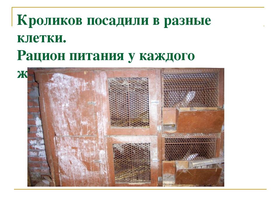 Кроликов посадили в разные клетки. Рацион питания у каждого животного был свой.