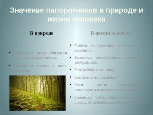 Значение папоротников в природе и жизни человека В природе Образуют среду оби