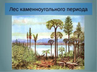 Лес каменноугольного периода В далекие-далекие времена, когда над Землей рас