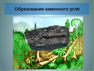 Образование каменного угля Отмершие древние папоротникообразные падали в вод