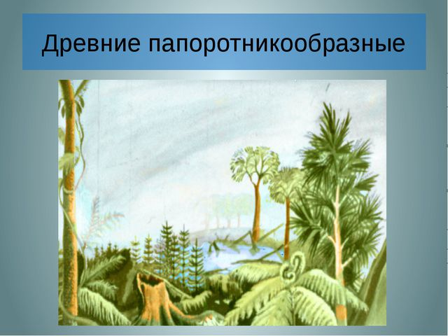 Древние папоротникообразные Около 300 млн. лет назад климат на Земле был теп...