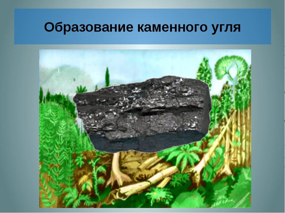 Образование каменного угля Отмершие древние папоротникообразные падали в вод...