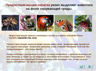 Предостерегающая окраска резко выделяет животное на фоне окружающей среды. Пр