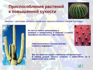 Приспособления растений к повышенной сухости Кактусы – растения, которые прек