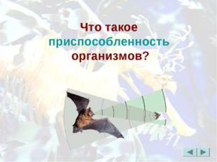 Что такое приспособленность организмов?