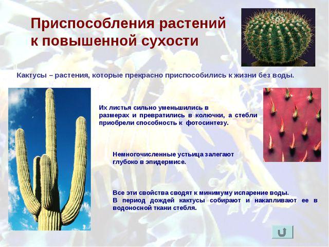 Приспособления растений к повышенной сухости Кактусы – растения, которые прек...
