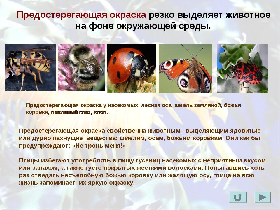 Предостерегающая окраска резко выделяет животное на фоне окружающей среды. Пр...