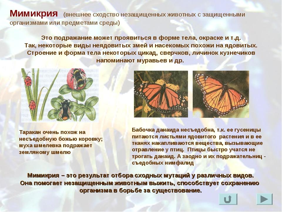 Мимикрия (внешнее сходство незащищенных животных с защищенными организмами ил...