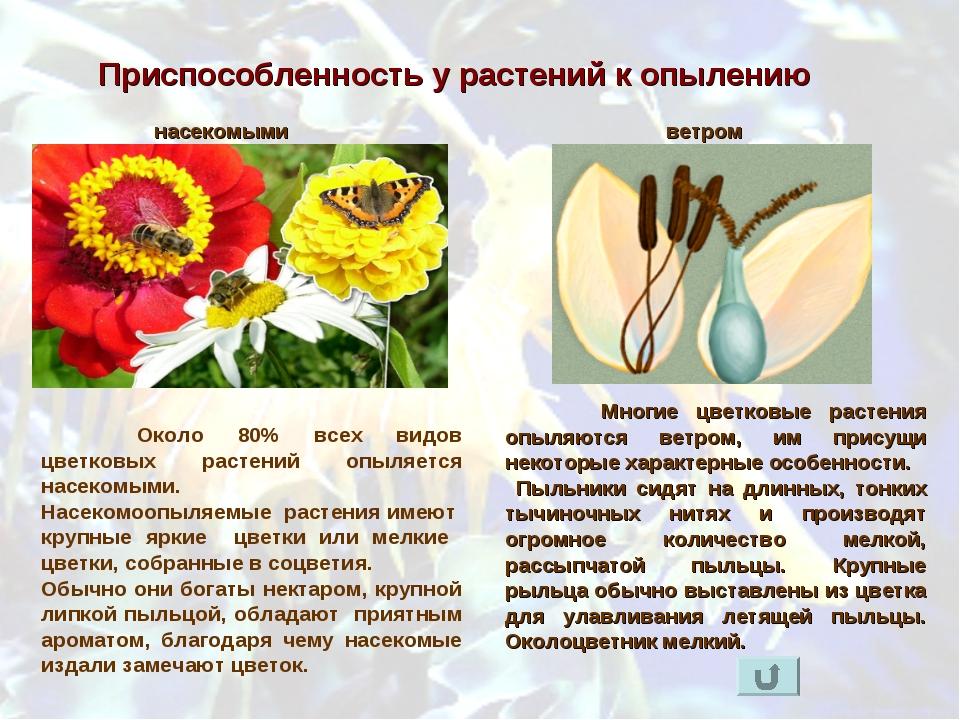 Приспособленность у растений к опылению Многие цветковые растения опыляются...