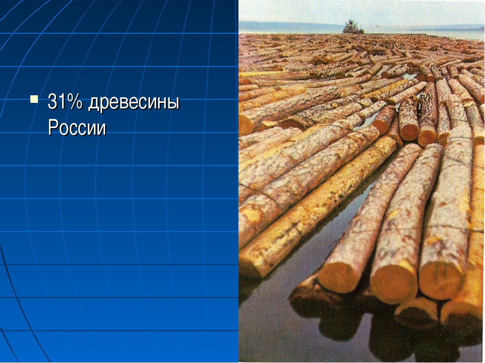 31% древесины России