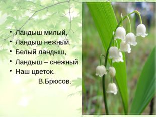 Ландыш милый, Ландыш нежный, Белый ландыш, Ландыш – снежный Наш цветок. В.Бр