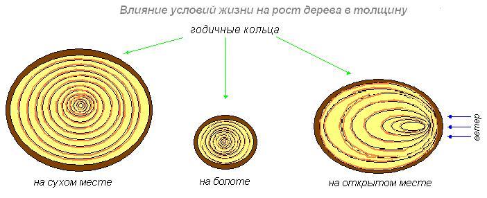 http://biouroki.ru/content/page/680/19.png