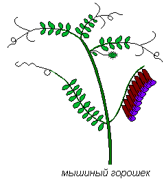 http://biouroki.ru/content/page/680/4.png